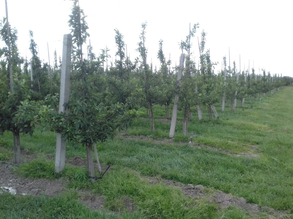 How to be producer of apples Apple orchard turnkey – establishment, running, consulting Setting up a turnkey apple orchard
